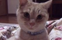 飼い主さんに喧嘩を売られた猫
