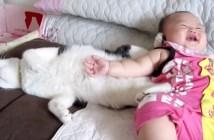 子守り猫のかわいい反抗