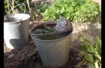 水風呂を楽しむ猫