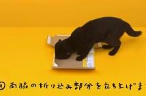 ダンボールを組み立てる黒猫
