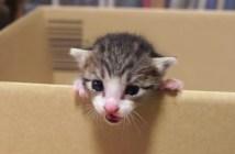 子猫の脱走物語
