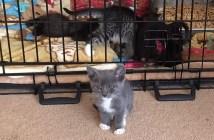 ケージを脱出する子猫