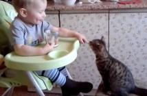 ベビーフードを子猫に食べさせる赤ちゃん