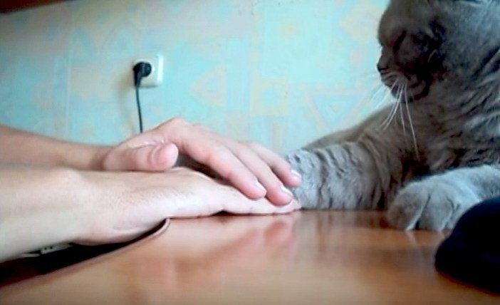 両手を使われた猫