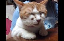 眠たくても返事する猫