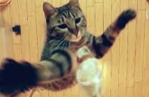 猫の跳躍力