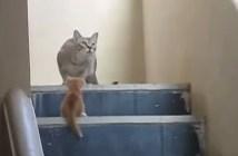 子猫を咥えてジャンプする母猫