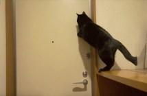 玄関ドアの鍵を閉める猫
