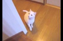 階段を登れない猫