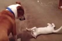 グルグルと回転する猫