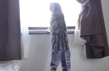 喧嘩を観戦する猫