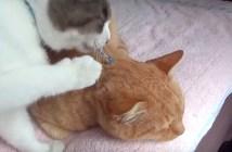 手作りの首輪が気になる猫