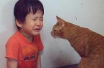 なぐさめる猫