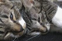 ぶちゃいくな顔で眠る姉妹猫