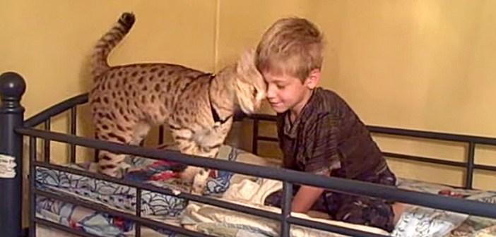 男の子が大好きなサバンナキャット