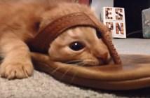 サンダルで突撃する子猫