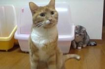 シッポタッチをする猫