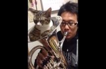 楽器の音を出させない猫