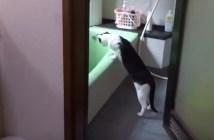 湯はりの状況を確認する猫