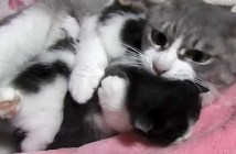 2匹の子猫を抱きしめる母猫