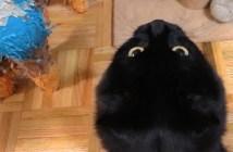 オモチャが欲しいけどいらないという猫