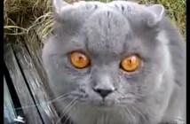 あか〜んと怒る猫