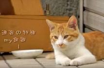 ラーメン屋さんの常連の猫