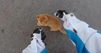 子猫を助ける女性ライダー