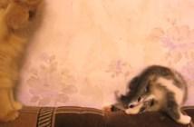 不思議なポーズで勝負を挑む子猫