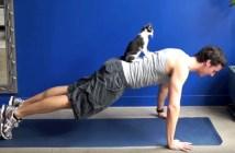 猫といっしょにトレーニング