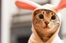 うさぎの格好をする猫