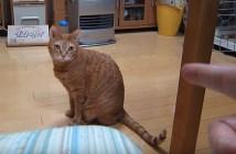 指鉄砲に撃たれる猫