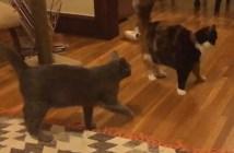 不意打ち猫