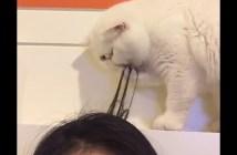 髪の毛をグルーミングする猫