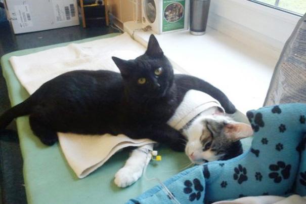 猫を抱き抱える黒猫