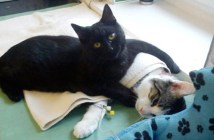 弱った動物を看護する黒猫