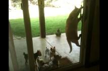 子犬のために窓を開ける猫