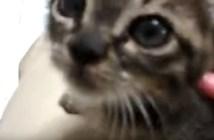 喉を鳴らす子猫の動画