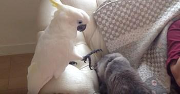 猫を触りたいオウム