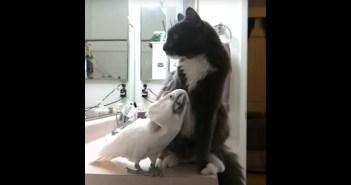 幸せいっぱいの猫とオウム