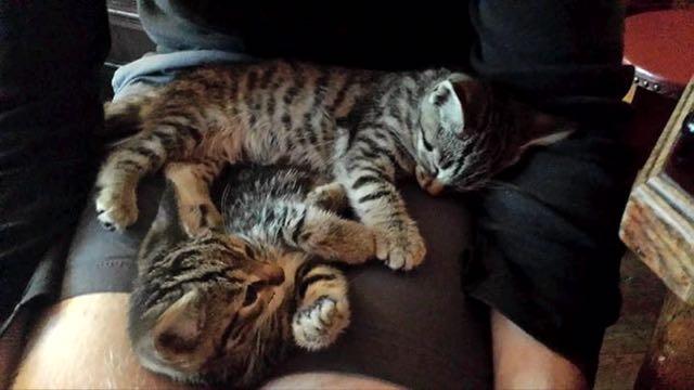 足の上で眠る子猫