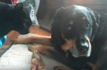 目を合わせない犬と猫