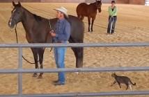 馬に猫キックする猫