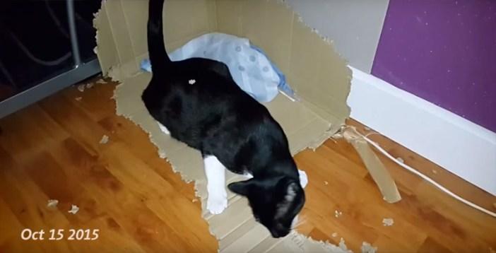 猫はダンボールをかじり続け…