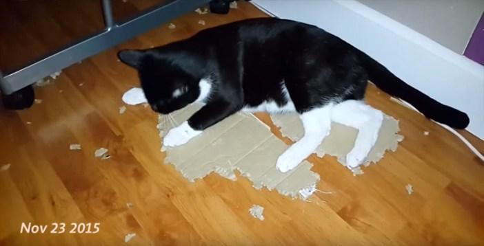 さらに猫はダンボールをガジガジ