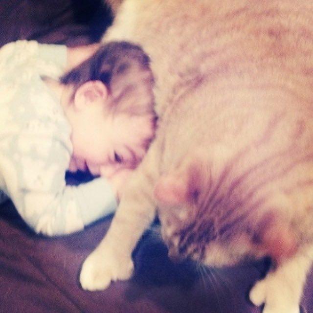 猫と一緒に寝そべる男の子