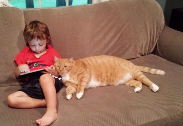 男の子に寄り添う猫