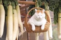大根といっしょに揺れる猫
