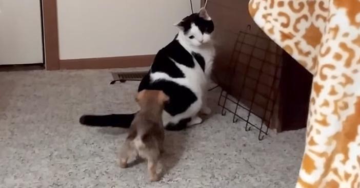 猫にアピールする子犬