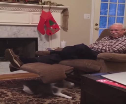 おじいさんのソファーの下に潜り込み